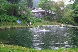 赤久縄(あかぐな)えさ池写真