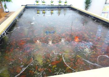 アミパ新潟店金魚池写真