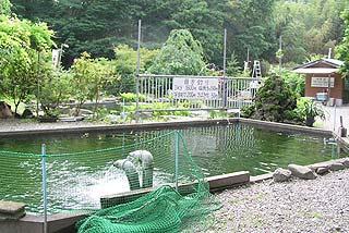 鮎川魚苑釣り池写真