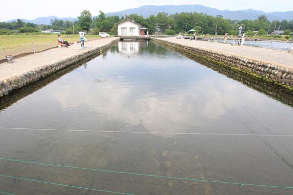 あづみ野フィッシングセンター団体可能なえさ釣り池写真