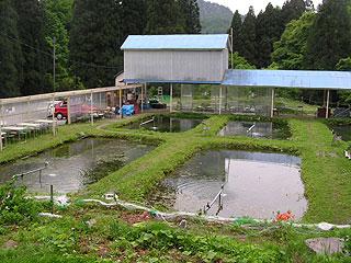 岩ノ沢養魚画像