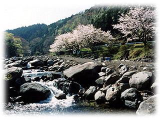 狩川渓谷ます釣り場画像