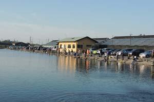 増井養魚場写真