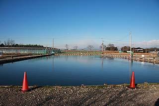 増井養魚場イベント池写真