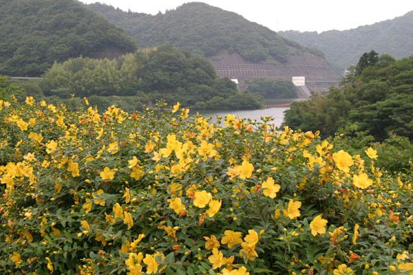 松川湖・松川湖上流地区観光協会HPより写真