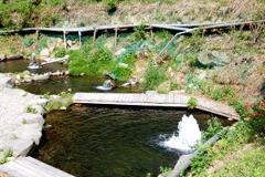 日本イワナセンターえさ池写真