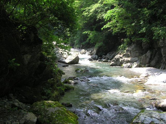 日原渓流釣り場自然のままの渓流写真