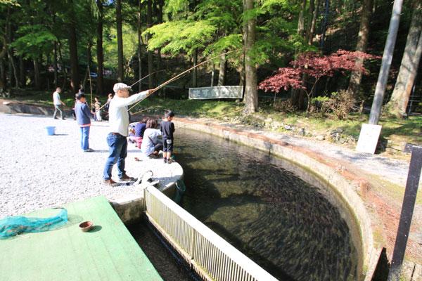 醒井養鱒場エサ釣り風景写真