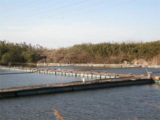 ヘラ田島池画像