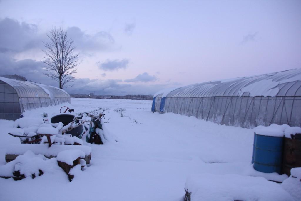 とれた小屋ふじい農園冬の農園写真