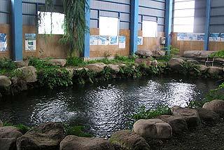 北川養魚場遊楽の池室内釣り写真