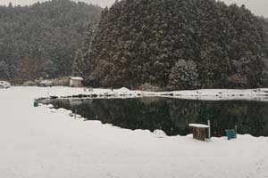 308Club冬の池写真