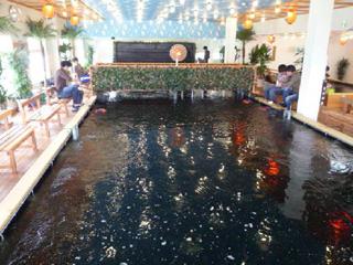 アミパ新潟店金魚画像
