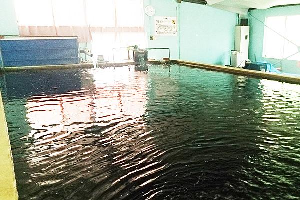 フィッシングランド・魚魚(とと)大池写真