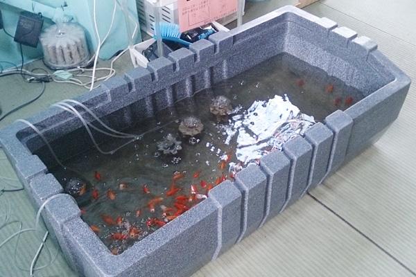 フィッシングランド・魚魚(とと)金魚すくいコーナー写真