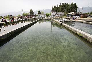 ハーブの里フィッシングエリア養魚池写真