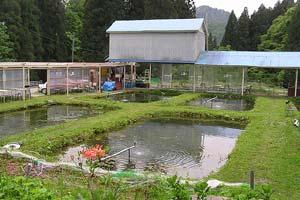 岩ノ沢養魚全景