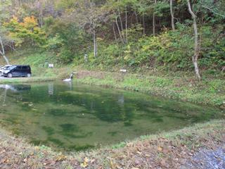 トラウトらんどフィッシングエリアえさ釣り池写真