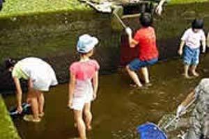 金精川のます池写真