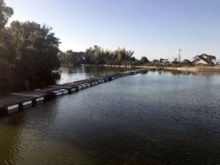 水藻フィッシングセンターバス画像