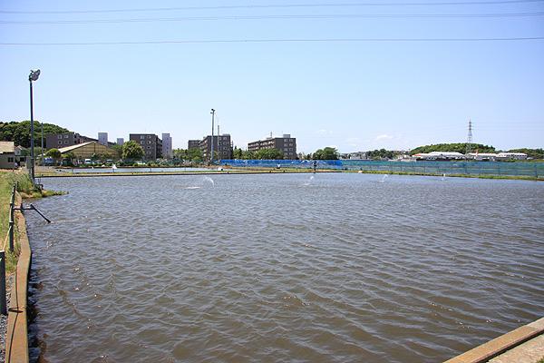 フィッシングエリア座間養魚場マンション方面を望む写真
