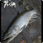 ec_芦ノ湖2015